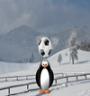 پنگوئن هد زن