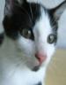Kitten Puzzleپازل گربه فلش